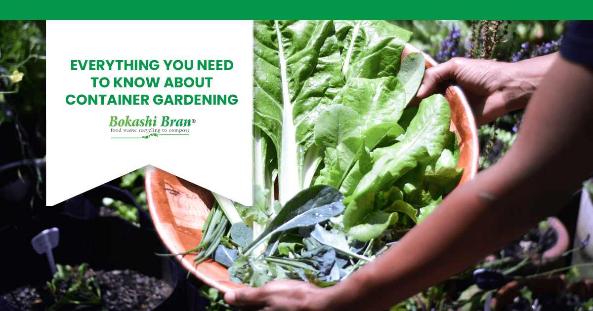 container gardening for green vegetables by bokashi bran